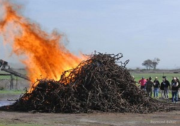 BioChar Burn Workshop